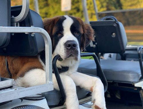 HAPPINESS IS GOLF CART RIDES